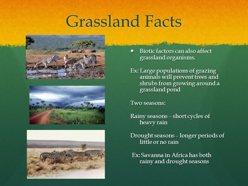 Grassland Facts Biotic factors can also affect grassland organisms.