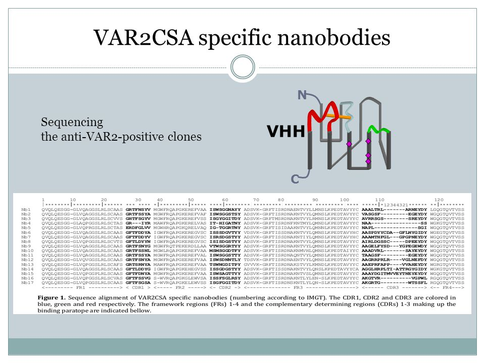 VAR2CSA specific nanobodies VHH N C Sequencing the anti-VAR2-positive clones