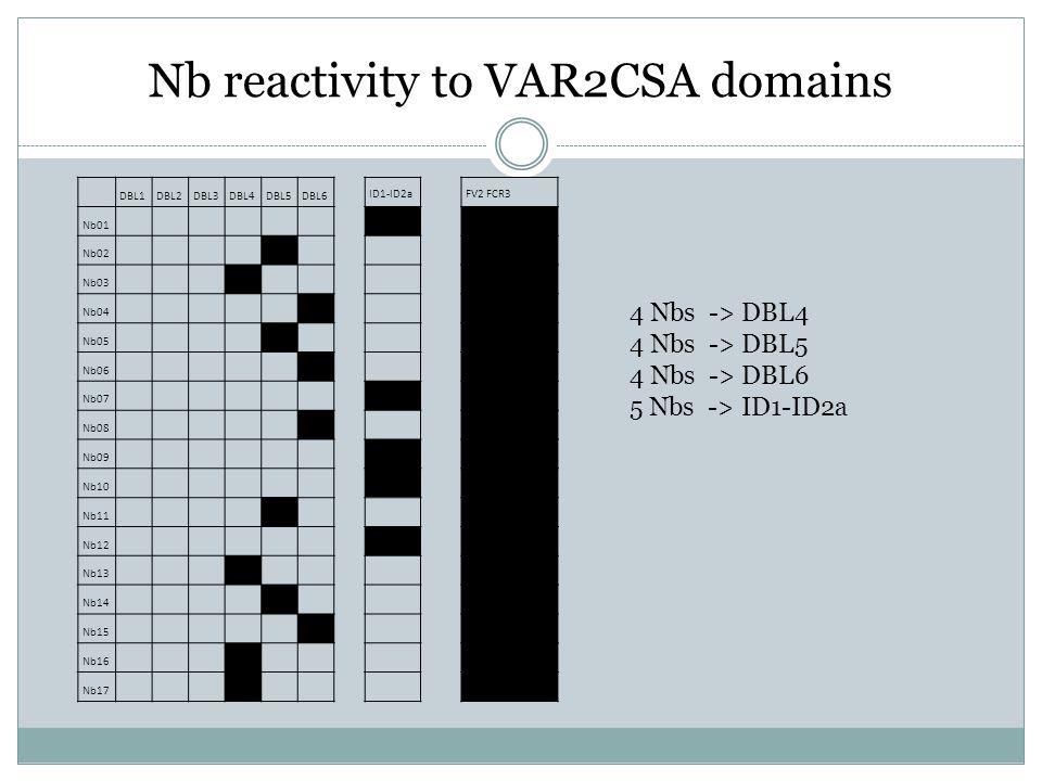 Nb reactivity to VAR2CSA domains DBL1DBL2DBL3DBL4DBL5DBL6 ID1-ID2a FV2 FCR3 Nb01 Nb02 Nb03 Nb04 Nb05 Nb06 Nb07 Nb08 Nb09 Nb10 Nb11 Nb12 Nb13 Nb14 Nb15 Nb16 Nb17 4 Nbs -> DBL4 4 Nbs -> DBL5 4 Nbs -> DBL6 5 Nbs -> ID1-ID2a