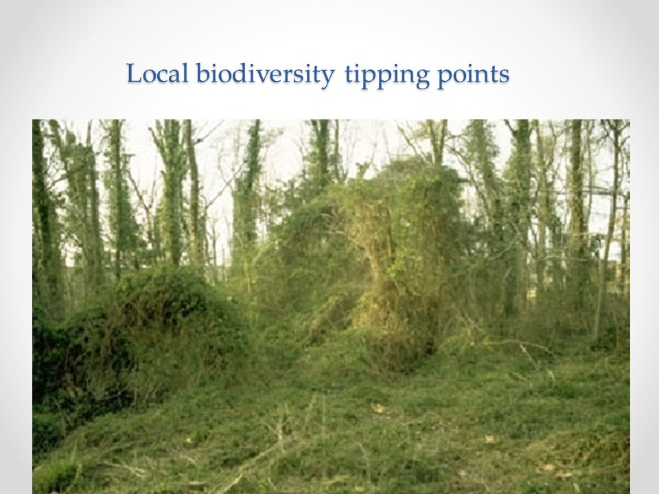 Local biodiversity tipping points Can occur through, e.g. Loss of specific species (framework species, ecological engineers); Loss of trophic levels (