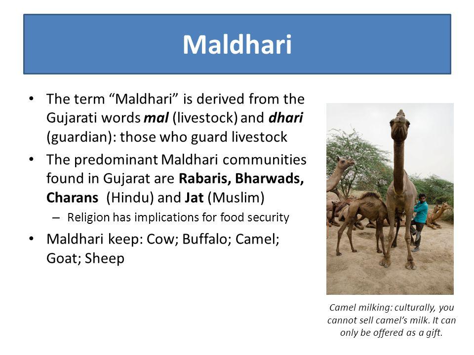 "Maldhari The term ""Maldhari"" is derived from the Gujarati words mal (livestock) and dhari (guardian): those who guard livestock The predominant Maldha"