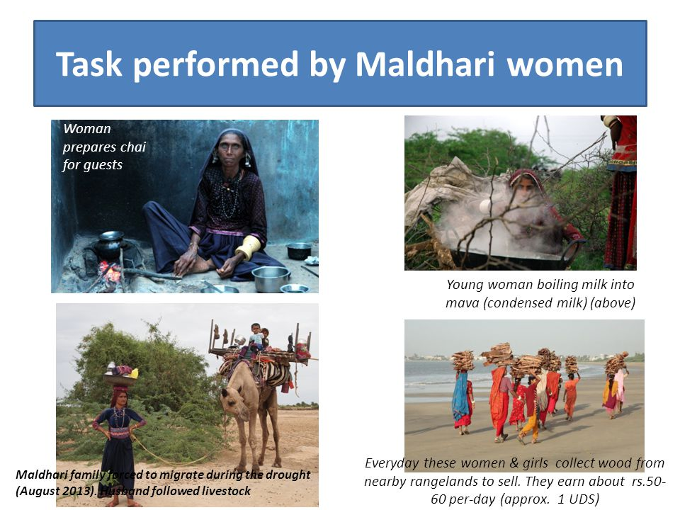Task performed by Maldhari women Young woman boiling milk into mava (condensed milk) (above) Everyday these women & girls collect wood from nearby rangelands to sell.