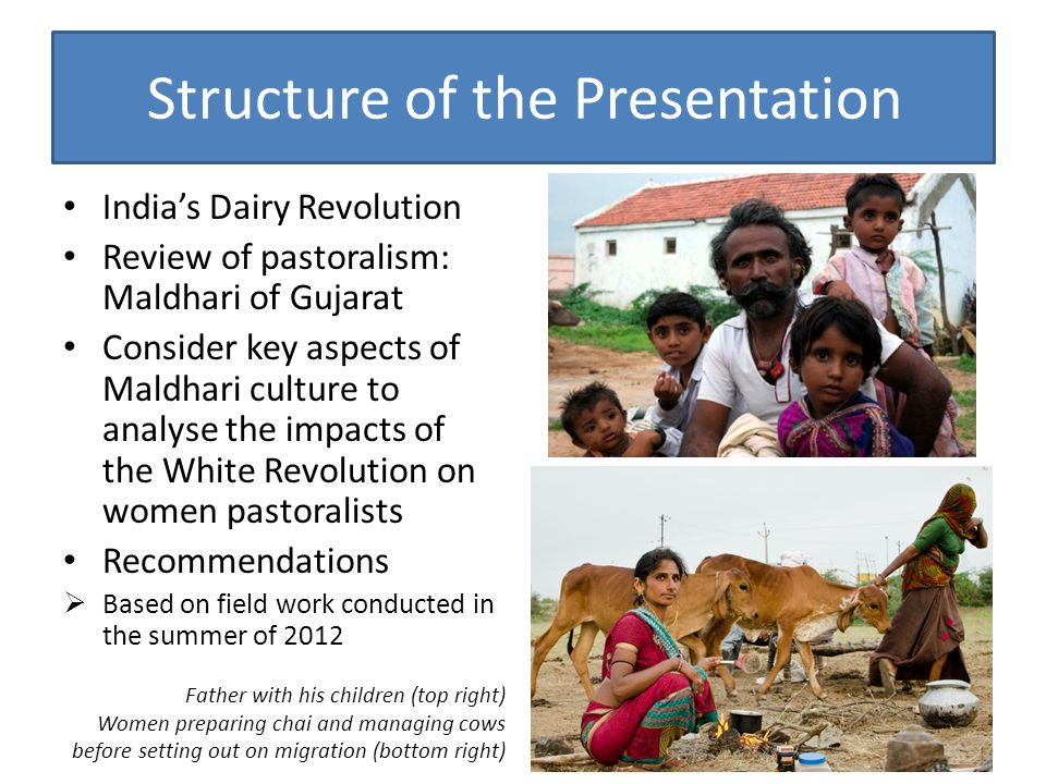 Structure of the Presentation India's Dairy Revolution Review of pastoralism: Maldhari of Gujarat Consider key aspects of Maldhari culture to analyse the impacts of the White Revolution on women pastoralists Recommendations  Based on field work conducted in the summer of 2012 Father with his children (top right) Women preparing chai and managing cows before setting out on migration (bottom right)