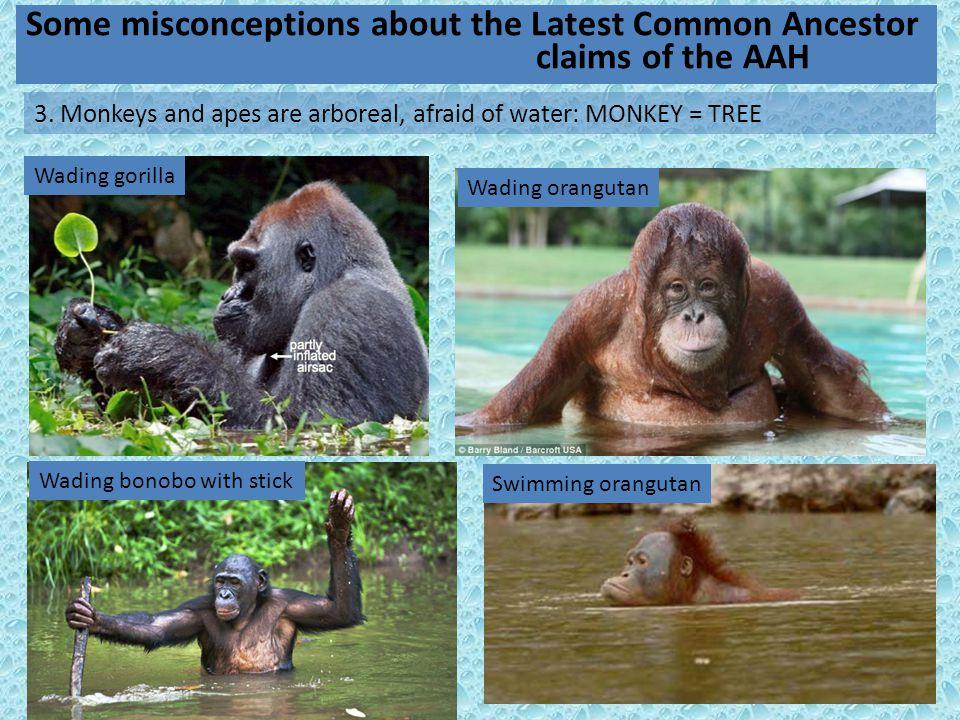 11 Wading bonobo with stick Wading gorilla Wading orangutan Swimming orangutan 3.