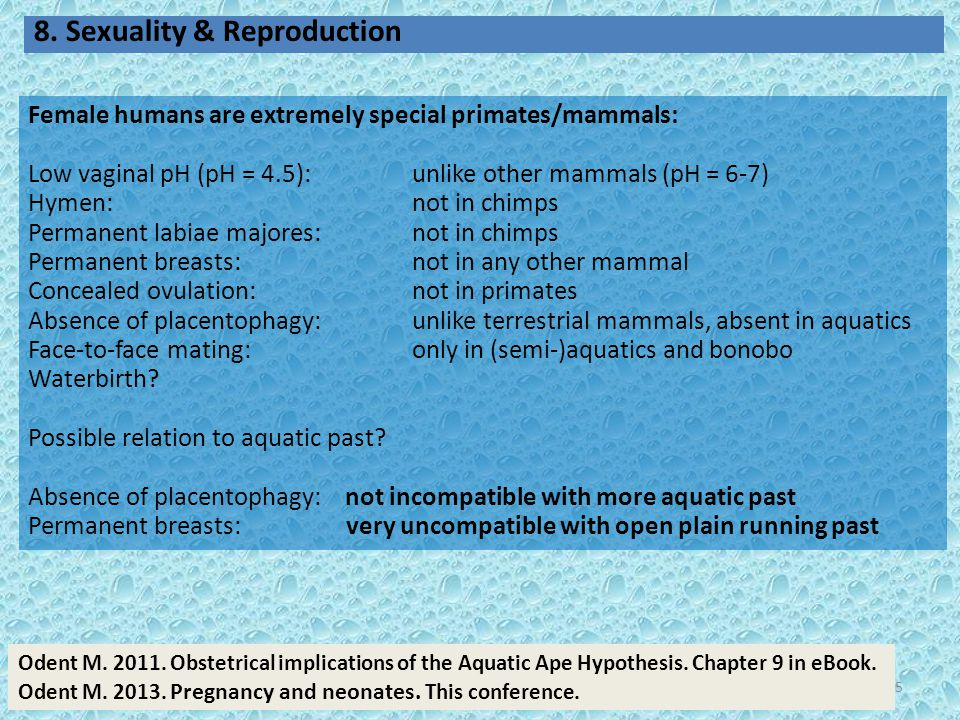 25 Female humans are extremely special primates/mammals: Low vaginal pH (pH = 4.5): unlike other mammals (pH = 6-7) Hymen: not in chimps Permanent lab
