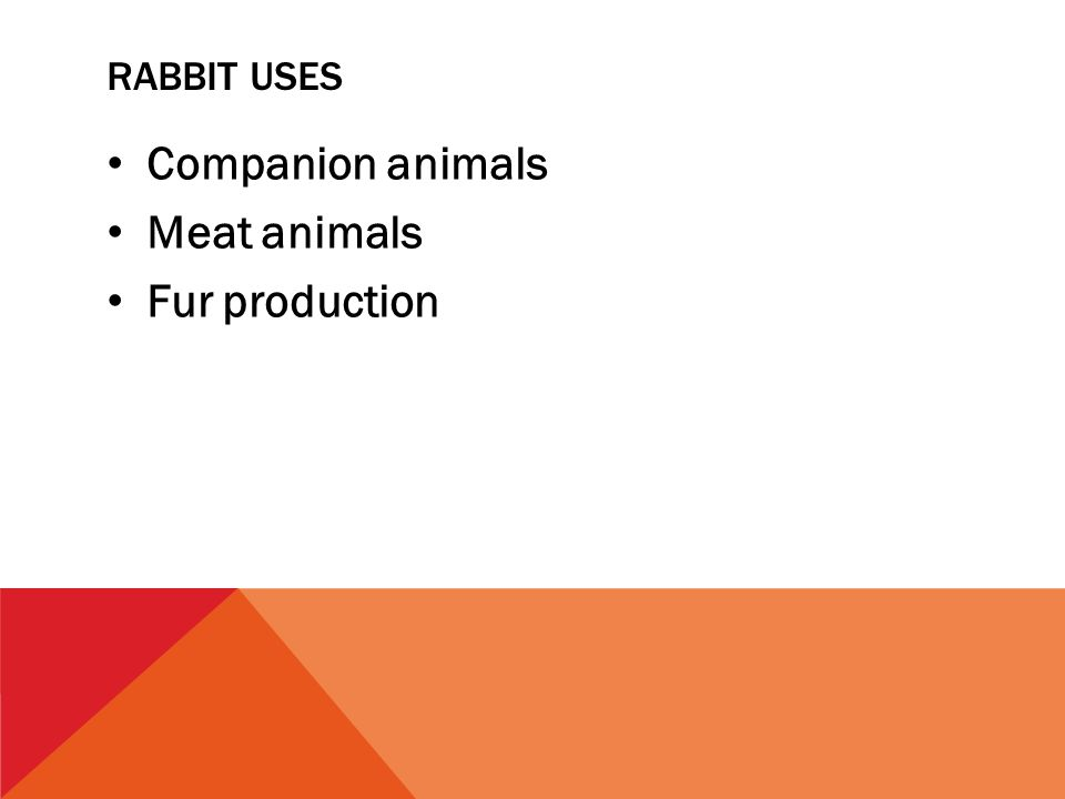 RABBIT USES Companion animals Meat animals Fur production