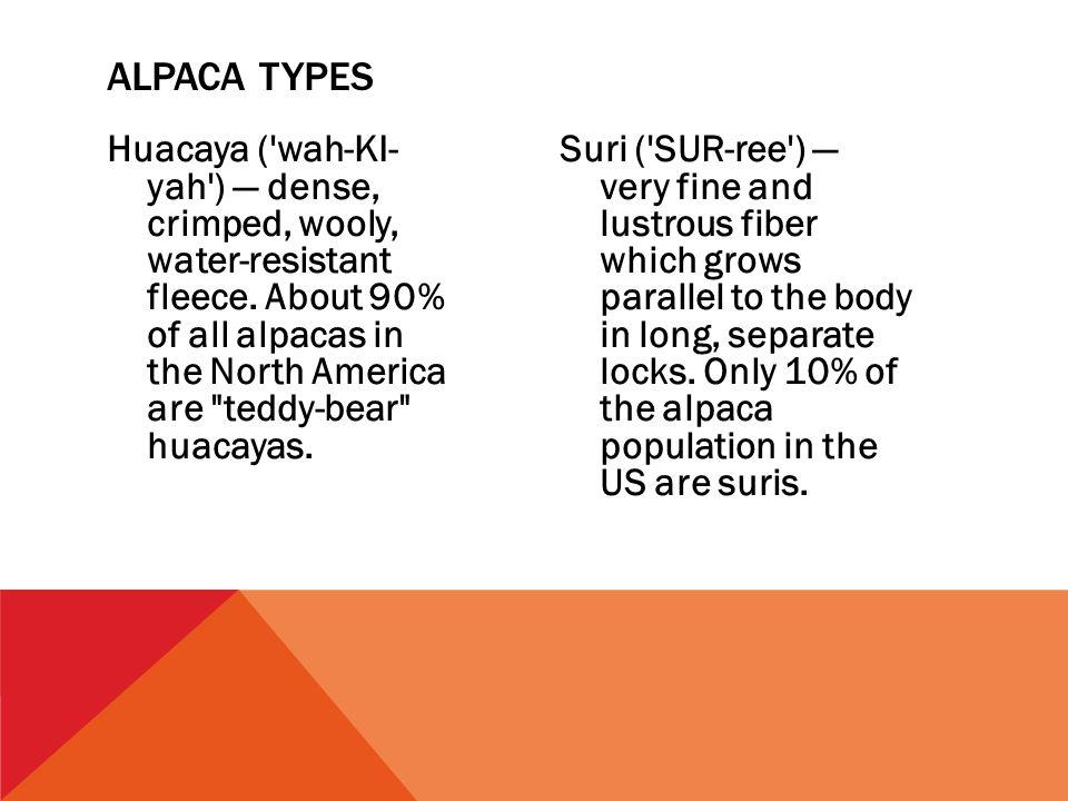 Huacaya ( wah-KI- yah ) — dense, crimped, wooly, water-resistant fleece.
