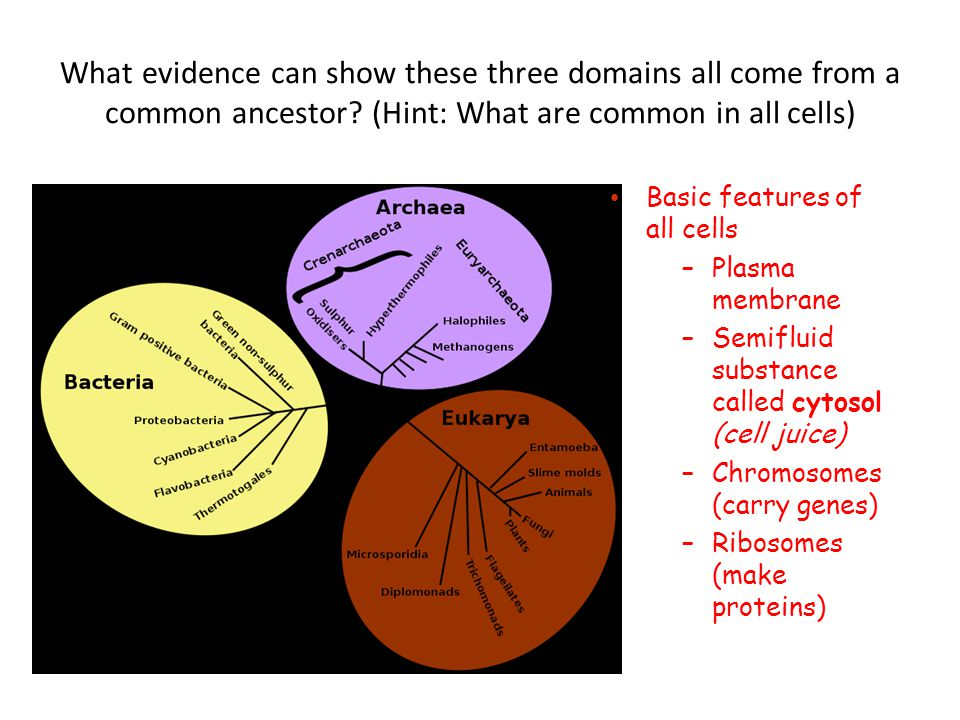 Basic features of all cells –Plasma membrane –Semifluid substance called cytosol (cell juice) –Chromosomes (carry genes) –Ribosomes (make proteins)