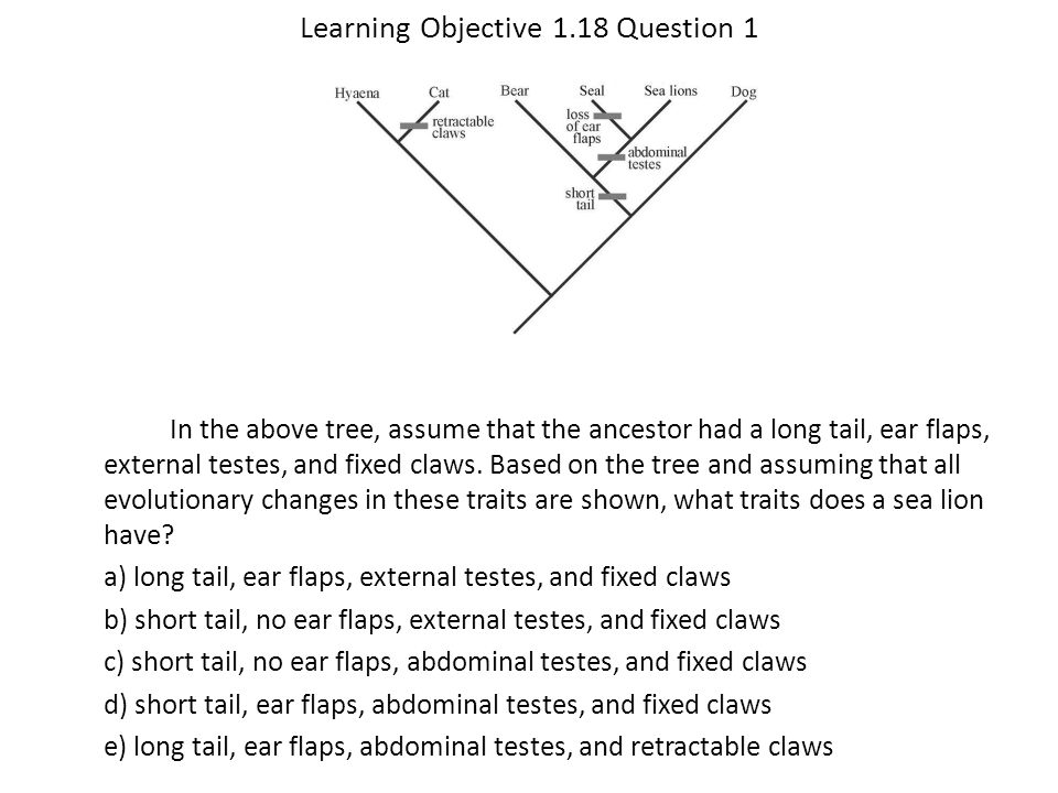 Learning Objective 1.18 Question 1 In the above tree, assume that the ancestor had a long tail, ear flaps, external testes, and fixed claws. Based on