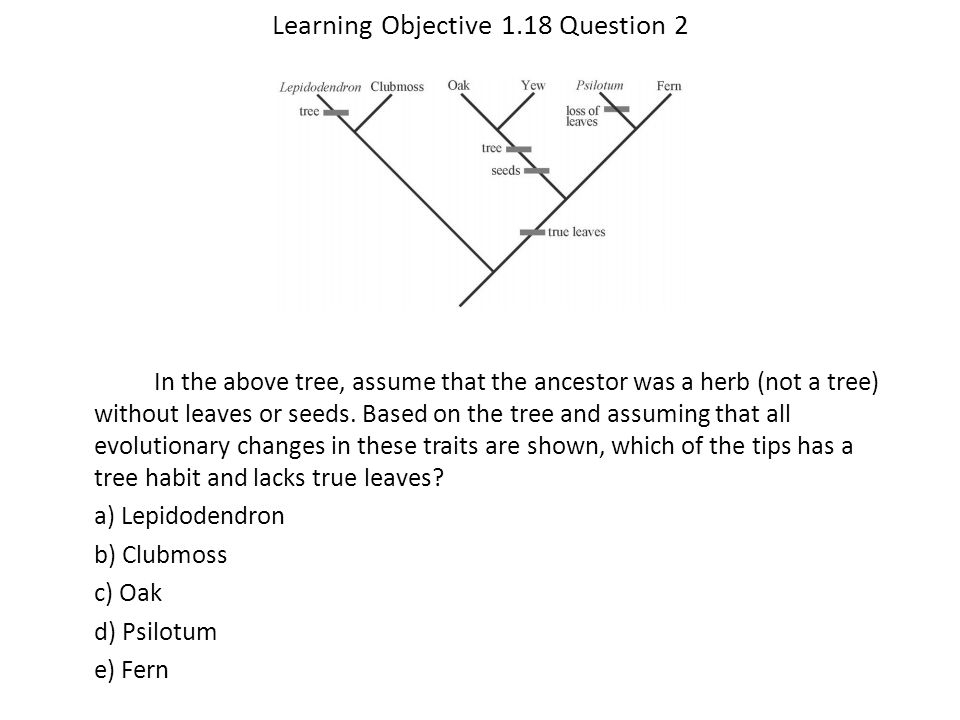 Learning Objective 1.18 Question 2 In the above tree, assume that the ancestor was a herb (not a tree) without leaves or seeds. Based on the tree and