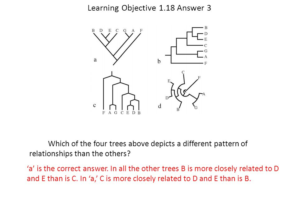Learning Objective 1.18 Answer 3 'a' is the correct answer. In all the other trees B is more closely related to D and E than is C. In 'a,' C is more c