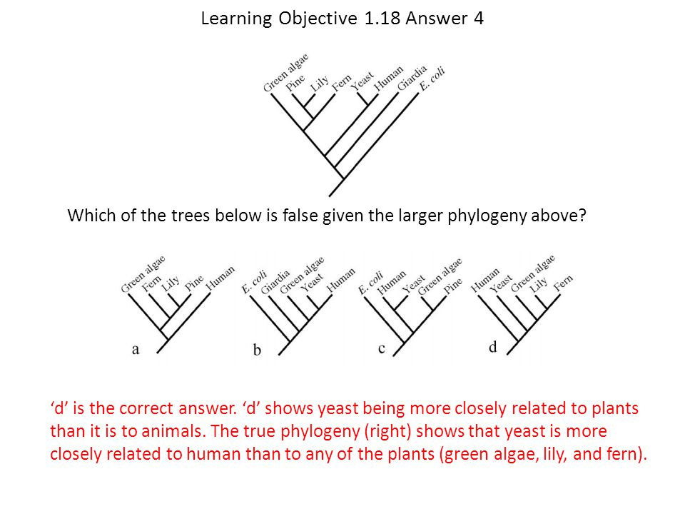 Learning Objective 1.18 Answer 4 'd' is the correct answer. 'd' shows yeast being more closely related to plants than it is to animals. The true phylo