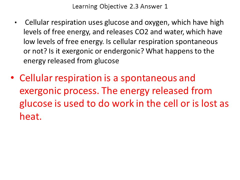 Learning Objective 2.3 Answer 1 Cellular respiration is a spontaneous and exergonic process. The energy released from glucose is used to do work in th