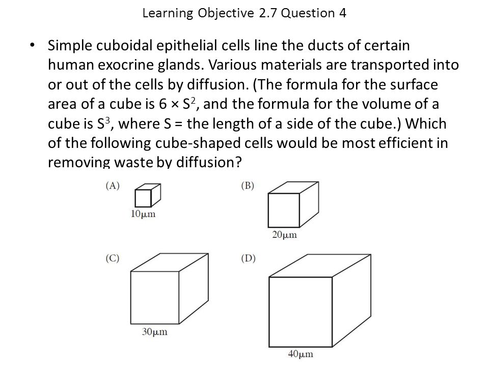 Learning Objective 2.7 Question 4 Simple cuboidal epithelial cells line the ducts of certain human exocrine glands. Various materials are transported