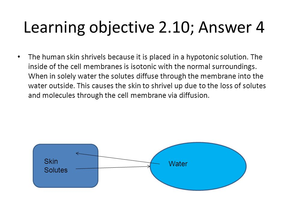 Learning objective 2.10; Answer 4 The human skin shrivels because it is placed in a hypotonic solution. The inside of the cell membranes is isotonic w