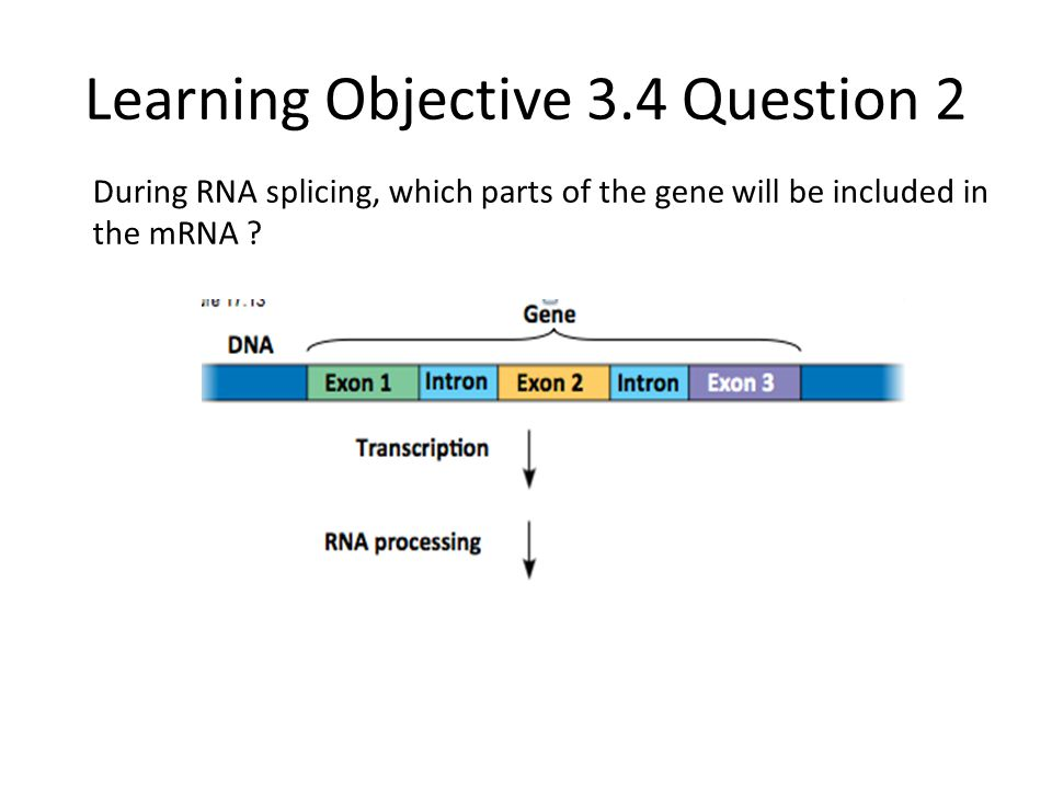 Learning Objective 3.4 Question 2 During RNA splicing, which parts of the gene will be included in the mRNA ?