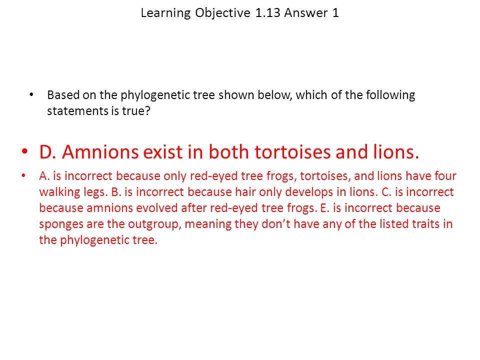 Learning Objective 1.13 Answer 1 D. Amnions exist in both tortoises and lions. A. is incorrect because only red-eyed tree frogs, tortoises, and lions