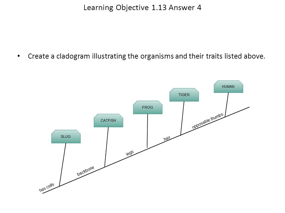 Learning Objective 1.13 Answer 4 Create a cladogram illustrating the organisms and their traits listed above.