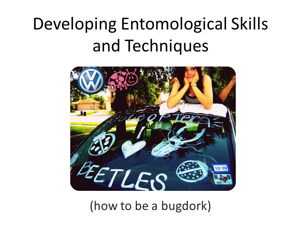 Developing Entomological Skills and Techniques (how to be a bugdork)