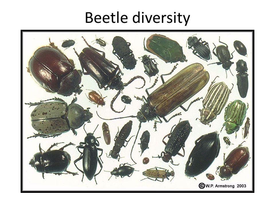 Beetle diversity