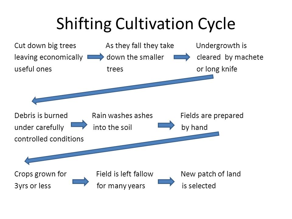 Shifting Cultivation Cycle Cut down big trees As they fall they take Undergrowth is leaving economically down the smaller cleared by machete useful ones trees or long knife Debris is burned Rain washes ashes Fields are prepared under carefully into the soil by hand controlled conditions Crops grown for Field is left fallow New patch of land 3yrs or less for many years is selected