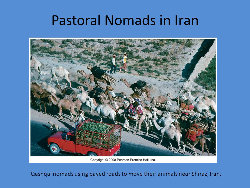 Pastoral Nomads in Iran Qashqai nomads using paved roads to move their animals near Shiraz, Iran.
