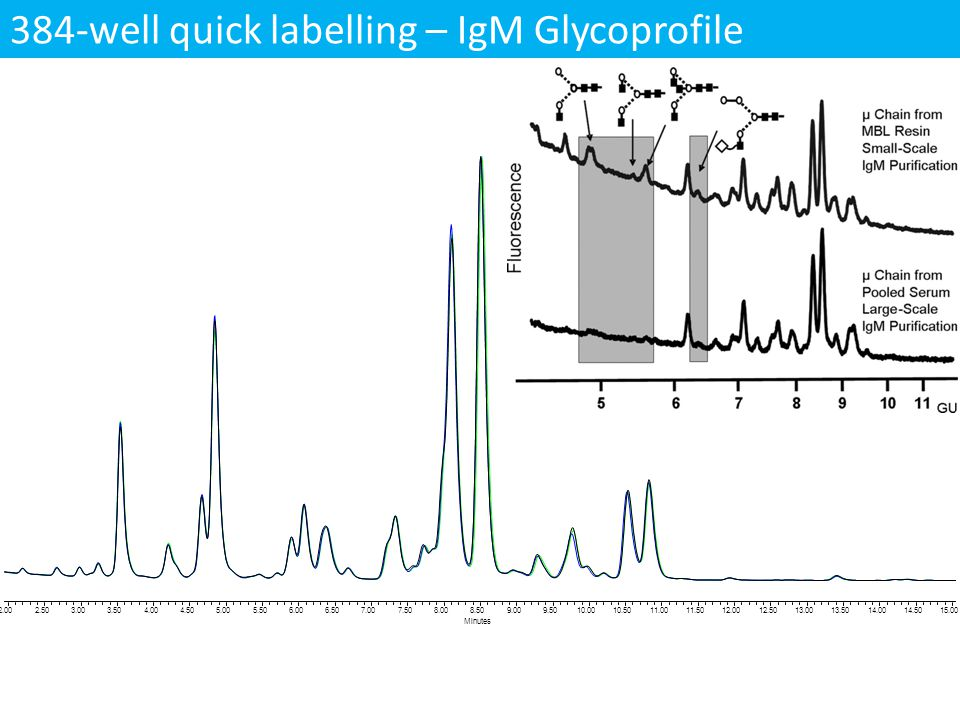 384-well quick labelling – IgM Glycoprofile