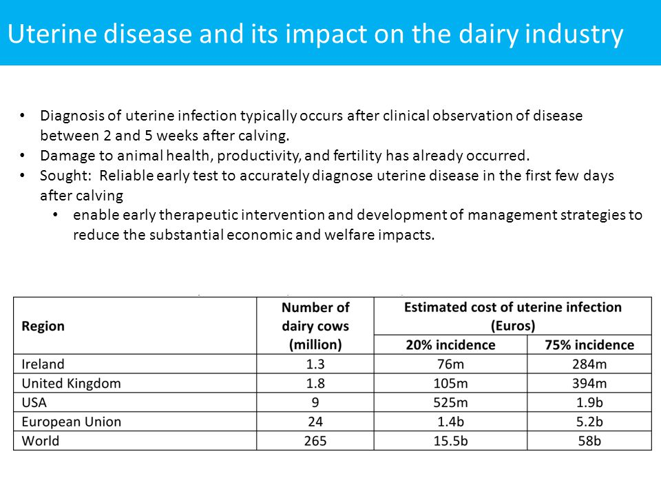 Uterine disease and its impact on the dairy industry Diagnosis of uterine infection typically occurs after clinical observation of disease between 2 a