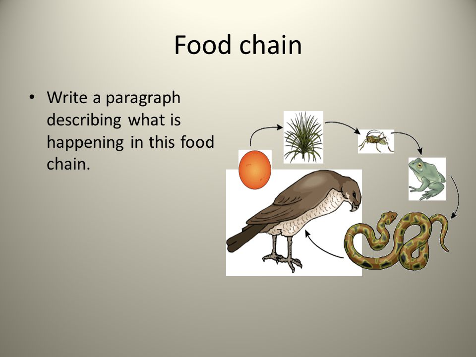 Food chain Write a paragraph describing what is happening in this food chain.