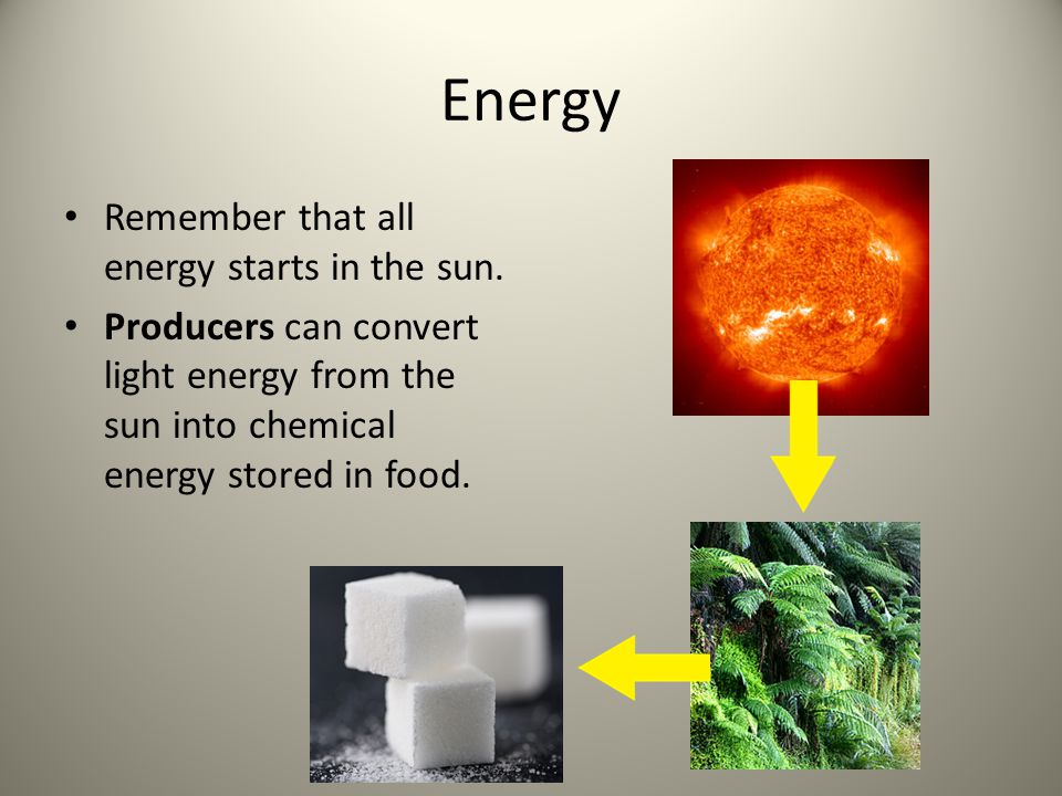 Energy Remember that all energy starts in the sun. Producers can convert light energy from the sun into chemical energy stored in food.