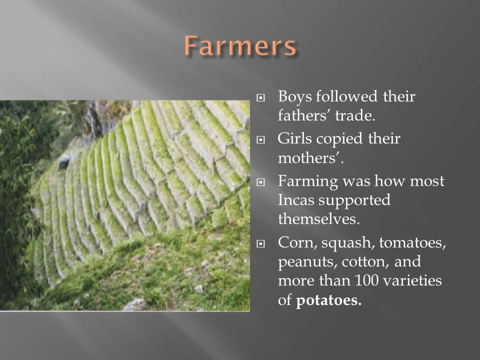  Boys followed their fathers' trade.  Girls copied their mothers'.  Farming was how most Incas supported themselves.  Corn, squash, tomatoes, pean