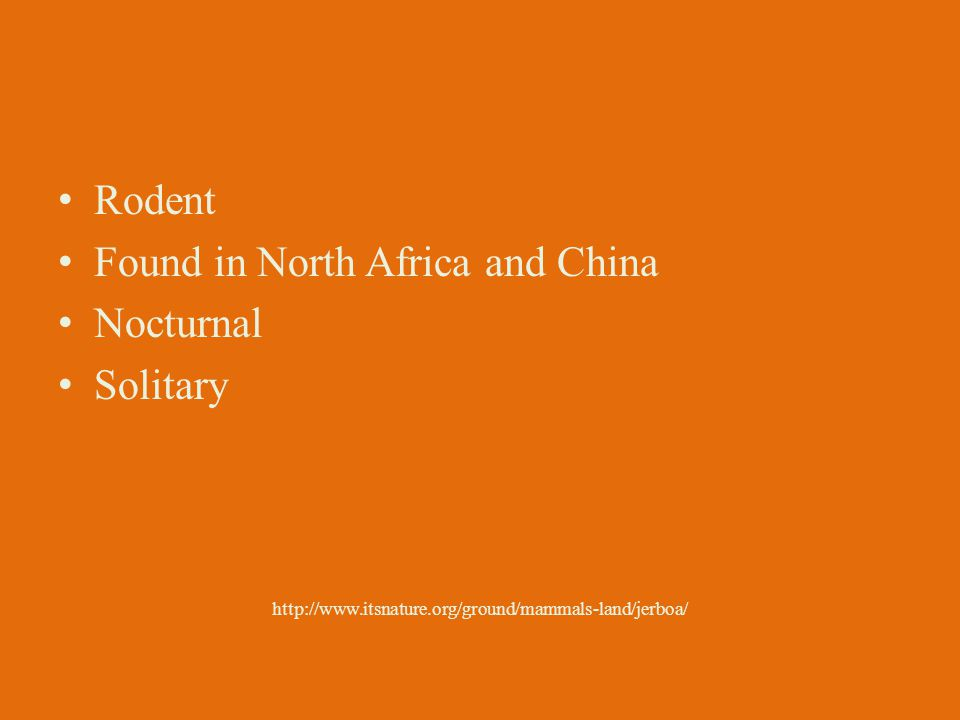 Rodent Found in North Africa and China Nocturnal Solitary http://www.itsnature.org/ground/mammals-land/jerboa/