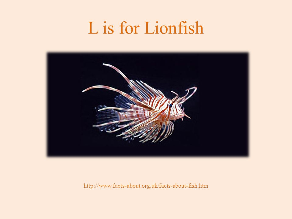 L is for Lionfish http://www.facts-about.org.uk/facts-about-fish.htm