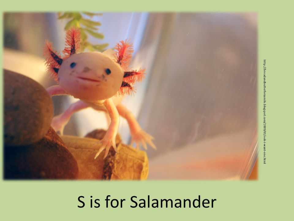 S is for Salamander http://breadandbutterforasmile.blogspot.com/2009/01/ooh-i-want-one.html