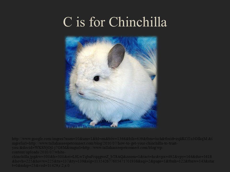 C is for Chinchilla http://www.google.com/imgres?num=10&um=1&hl=en&biw=1366&bih=639&tbm=isch&tbnid=zqkKCf1s3GfkqM:&i mgrefurl=http://www.tallahasseepetconnect.com/blog/2010/07/how-to-get-your-chinchilla-to-trust- you/&docid=WKSNjOjl-j7G8M&imgurl=http://www.tallahasseepetconnect.com/blog/wp- content/uploads/2010/07/white- chinchilla.jpg&w=300&h=300&ei=L9LwTqbaFcqqgweZ_bT8AQ&zoom=1&iact=hc&vpx=492&vpy=164&dur=1618 &hovh=225&hovw=225&tx=137&ty=139&sig=113542677605471701938&sqi=2&page=1&tbnh=122&tbnw=143&star t=0&ndsp=23&ved=1t:429,r:2,s:0