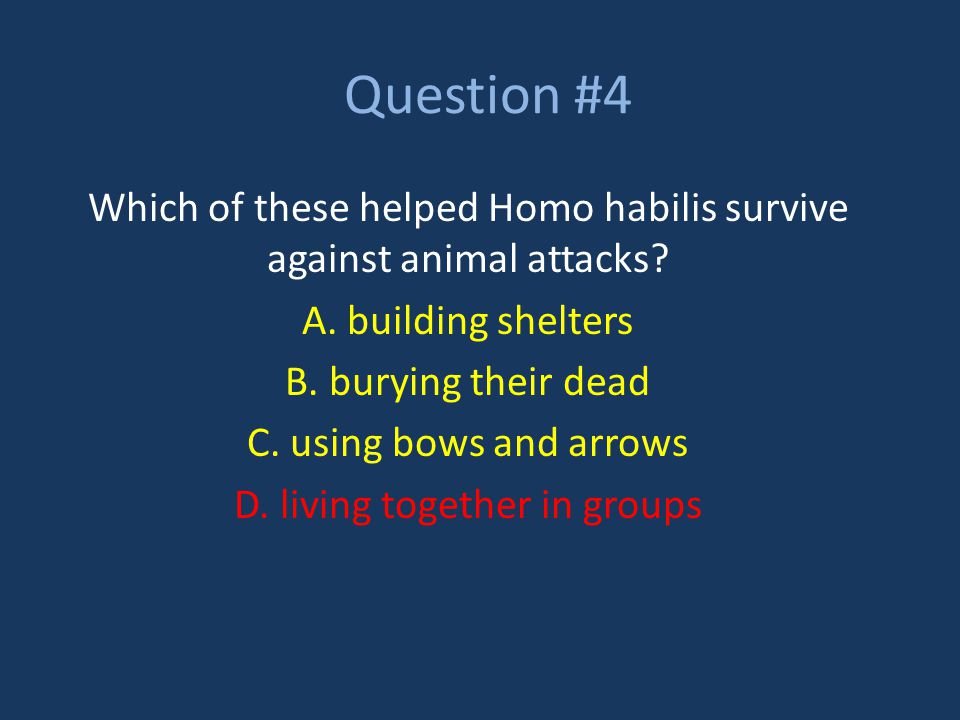 Question #4 Which of these helped Homo habilis survive against animal attacks? A. building shelters B. burying their dead C. using bows and arrows D.