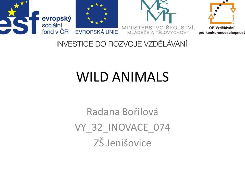 WILD ANIMALS Radana Bořilová VY_32_INOVACE_074 ZŠ Jenišovice