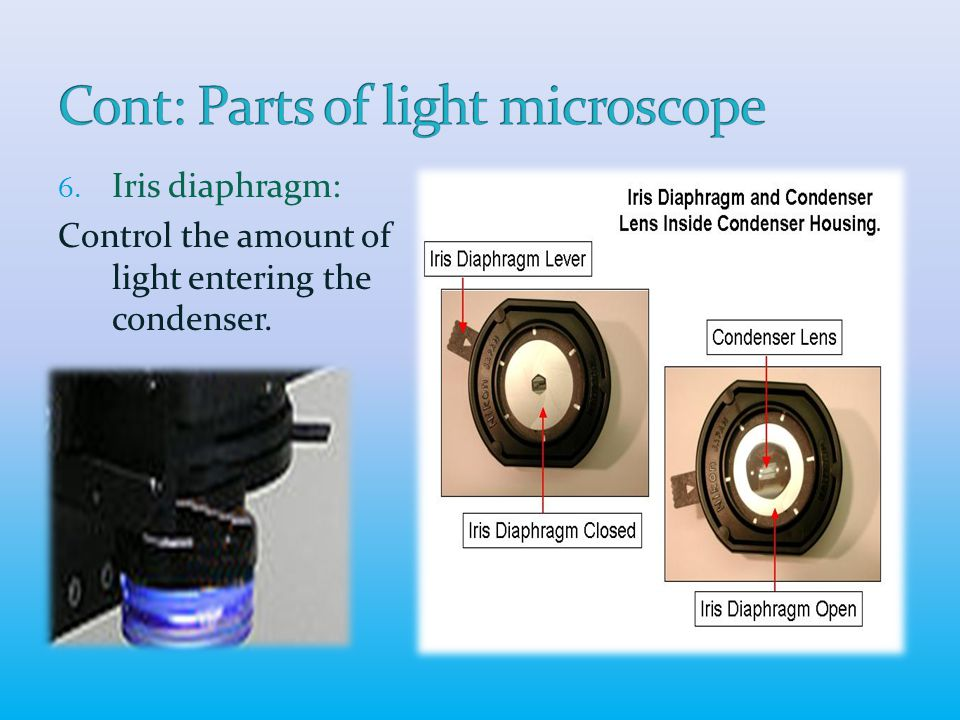 6. Iris diaphragm: Control the amount of light entering the condenser.