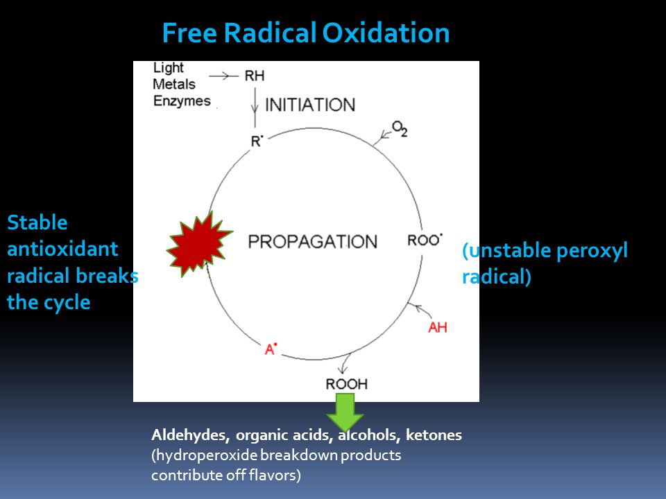 Free Radical Oxidation Stable antioxidant radical breaks the cycle (unstable peroxyl radical) Aldehydes, organic acids, alcohols, ketones (hydroperoxide breakdown products contribute off flavors)