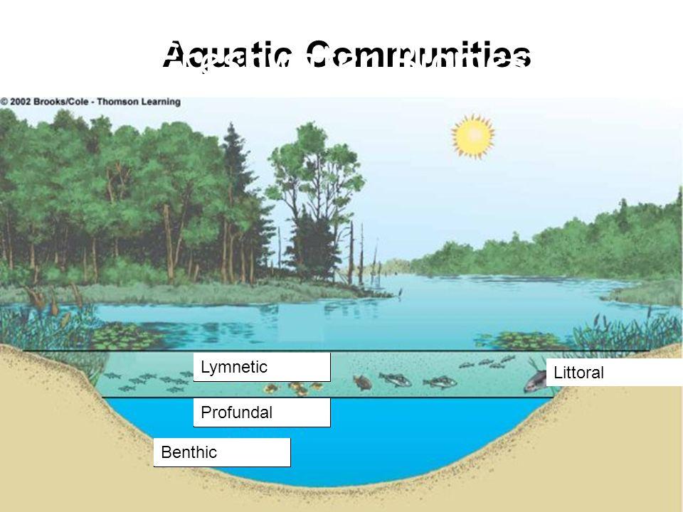 Aquatic Communities Littoral Lymnetic Profundal Benthic Freshwater Biomes