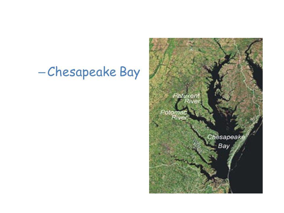 Saltwater Estuaries – Chesapeake Bay