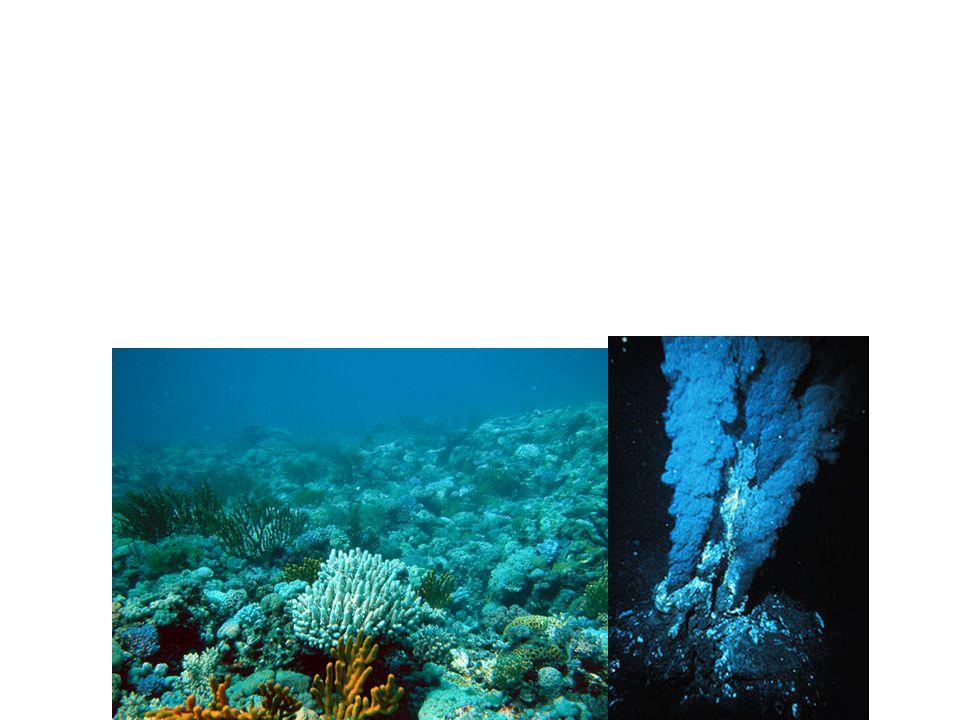 "Benthic Zone Benthos Greek "" depths of the sea """