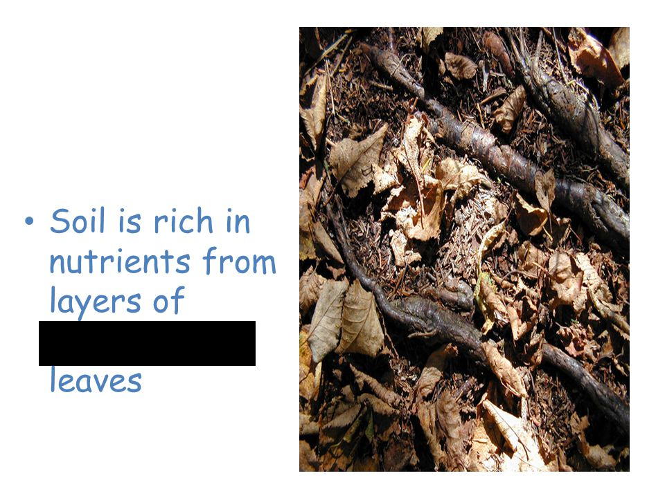 Temperate Deciduous Forest Soil is rich in nutrients from layers of decomposing leaves
