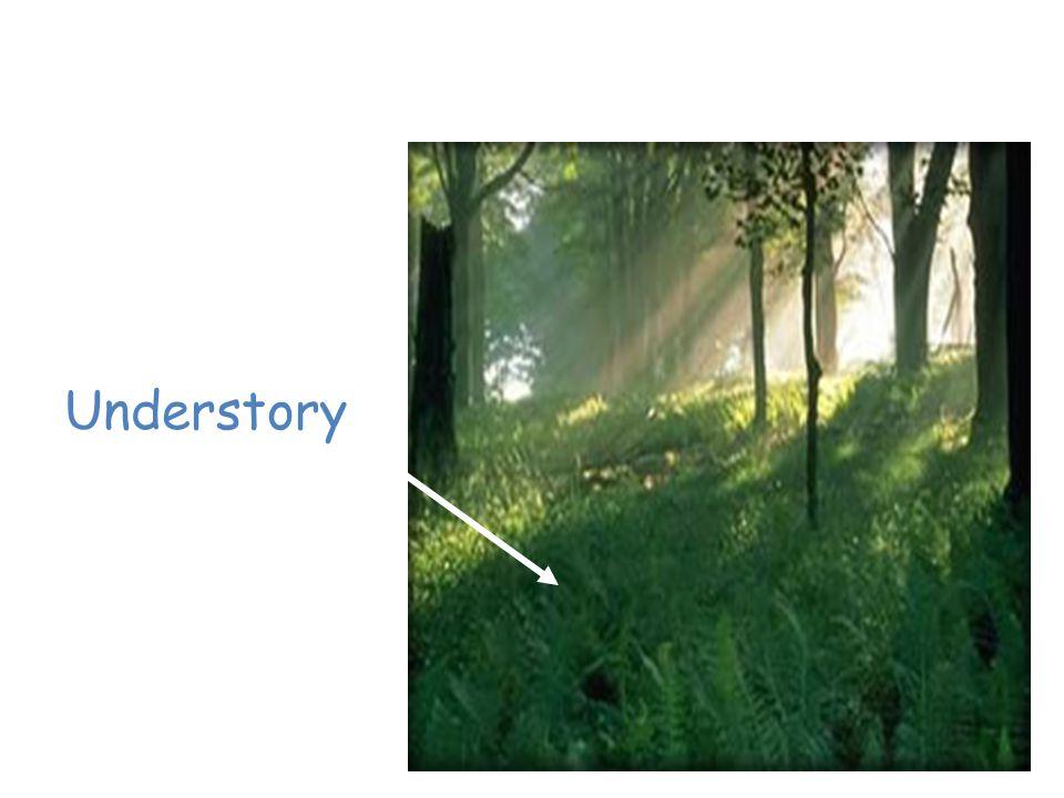 Layers of Vegetation Understory