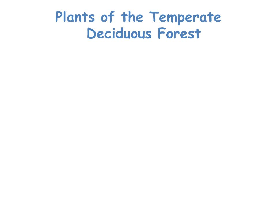 Plants of the Temperate Deciduous Forest Plant life is abundant.