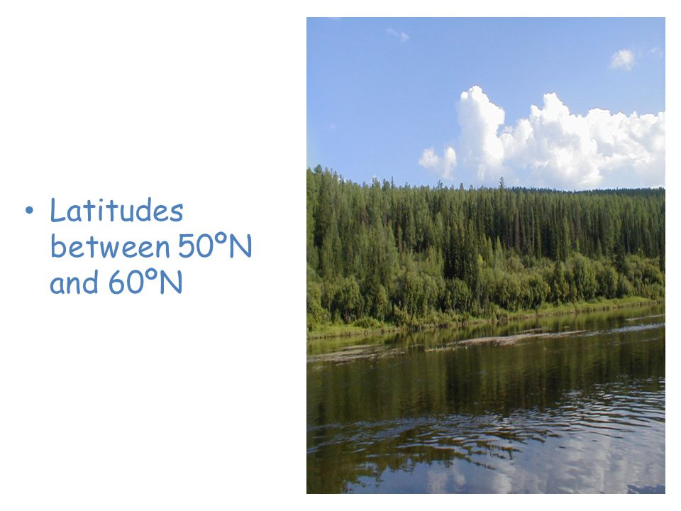 Taiga or Coniferous Forest Latitudes between 50ºN and 60ºN
