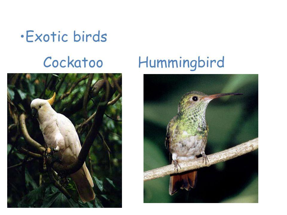 Animals of the Tropical Rain Forest Exotic birds Cockatoo Hummingbird