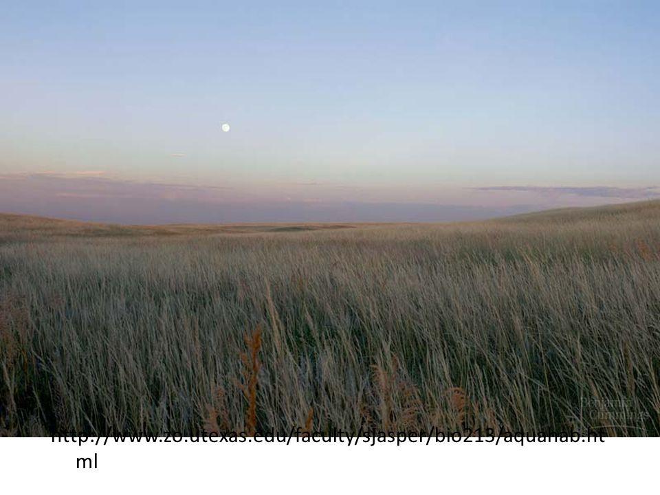 Temperate Grassland http://www.zo.utexas.edu/faculty/sjasper/bio213/aquahab.ht ml