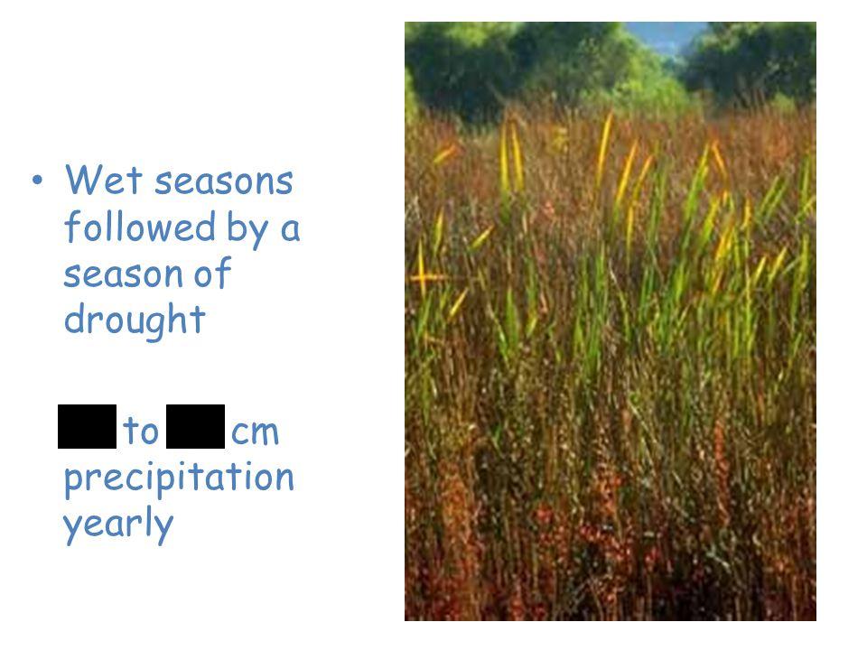 Grassland Wet seasons followed by a season of drought 25 to 75 cm precipitation yearly