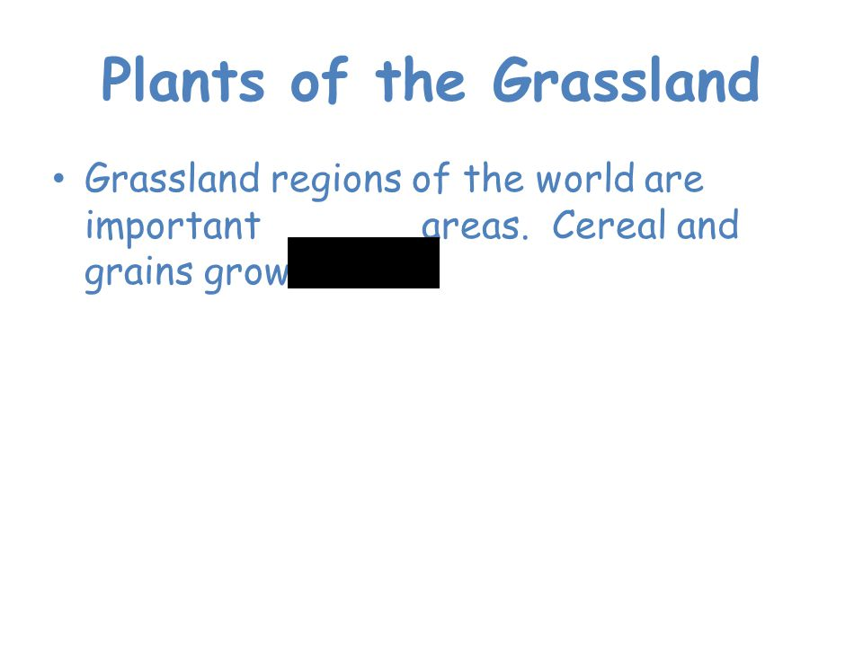 Plants of the Grassland Grassland regions of the world are important farming areas. Cereal and grains grow here.